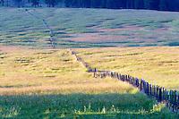Long fence line in pasture. Zumwalt Prairie, Oregon