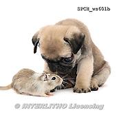 Xavier, ANIMALS, REALISTISCHE TIERE, ANIMALES REALISTICOS, FONDLESS, photos+++++,SPCHWS601B,#A#