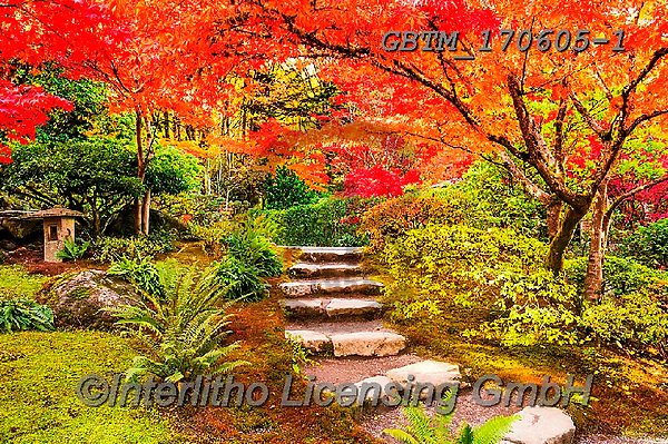 Tom Mackie, LANDSCAPES, LANDSCHAFTEN, PAISAJES, photos,+America, American, Americana, North America, Pacific Northwest, Seattle, Tom Mackie, USA, Washington, autumn, autumnal, color+ful, colourful, fall, footpath, horizontal, horizontals, inspiration, inspirational, inspire, japanese garden, japanese maple+landscape, landscapes, leaf, leaves, natural, nature, no people, path, pathway, pathways, red, scenery, scenic, season, tree+, trees,America, American, Americana, North America, Pacific Northwest, Seattle, Tom Mackie, USA, Washington, autumn, autumn+,GBTM170605-1,#l#, EVERYDAY
