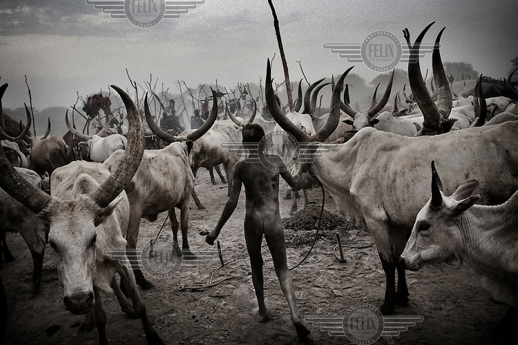 South Sudan. 23 March 2011...A Dinka boy among cattle in the enclosure of a cattle camp following the herds in areas that maintain water and pasture during the dry season..