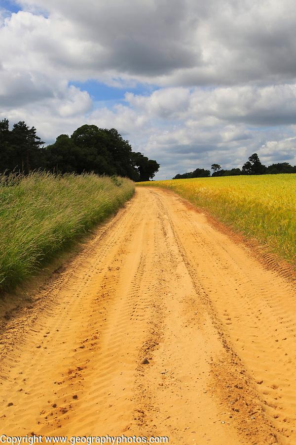 Sandy un-made track country lane, Shottisham, Suffolk Sandlings, England, UK