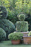 A well kept, landscaped garden with clipped topiary shrubs in terracotta pots. The various shrubs provide a contrasting variety of leaf shapes, textures and greens.