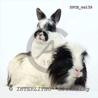Xavier, ANIMALS, fondless, photos, SPCHWS139,#A#