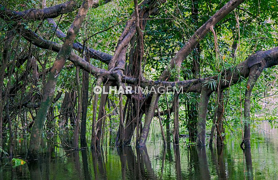 Igapo Reserva de Desenvolvimento Sustentavel Mamiraua, Amazonas. 2018. Foto de Luis Villaça.