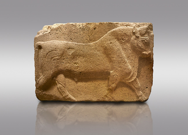 Pictures & images of Phrygian relief sculpted orthostat stone panel, 1200-700 B.C. Anatolian Civilisations Museum, Ankara, Turkey. Figure of a walking bull. <br /> <br /> Against a gray background.