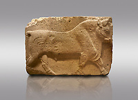 Pictures &amp; images of Phrygian relief sculpted orthostat stone panel, 1200-700 B.C. Anatolian Civilisations Museum, Ankara, Turkey. Figure of a walking bull. <br /> <br /> Against a gray background.