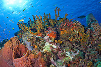 Coral Reef Scenic<br />
