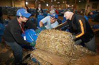 Volunteers bag, sort and stack over 1200 bales of straw and hay to be sent out to the 22 checkpoints on the Iditarod trail.  The straw is used as beds for the dogs as they rest.   Iditarod 2009