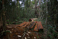 Rose wood illegally cut remains in Prey Lang forest. © Antoine Raab / Ruom