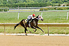 Drivebymedia winning at Delaware Park on 6/23/12