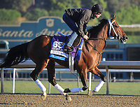 Alpha, trained by Kiaran McLaughlin, trains for the Breeders' Cup Dirt Mile at Santa Anita Park in Arcadia, California on October 30, 2013.