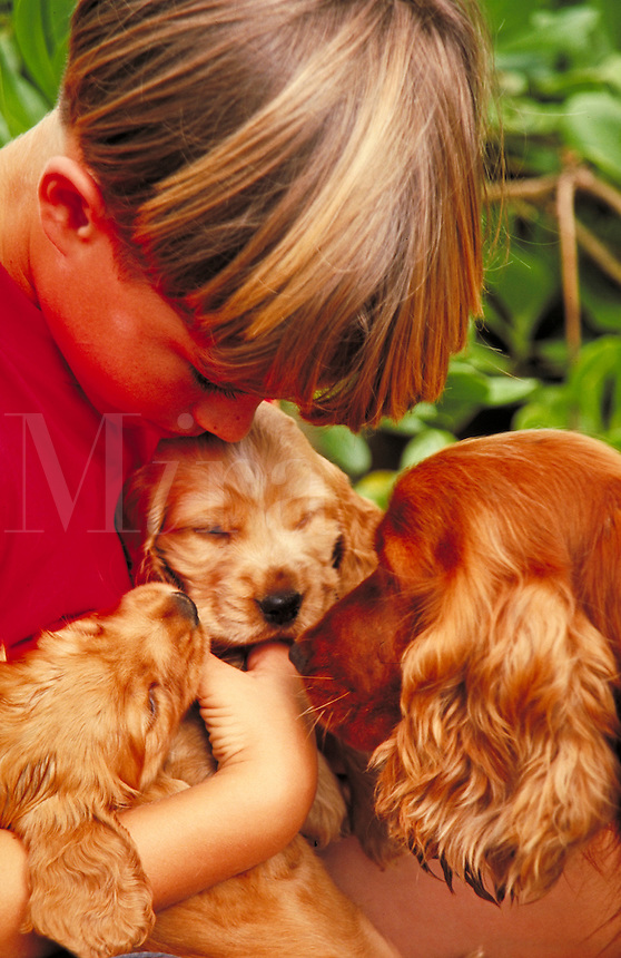 Young Boy with puppies and adult dog, animals, child, children. Hawaii.