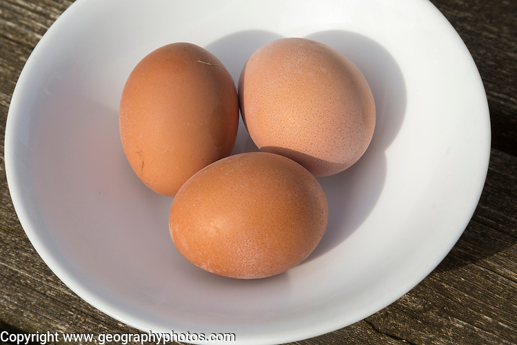 Three brown fresh free range hen eggs in white porcelain bowl