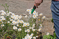 Watering flowers in a garden using a hose pipe.