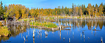 Flooded pond near Yellowknife in autumn