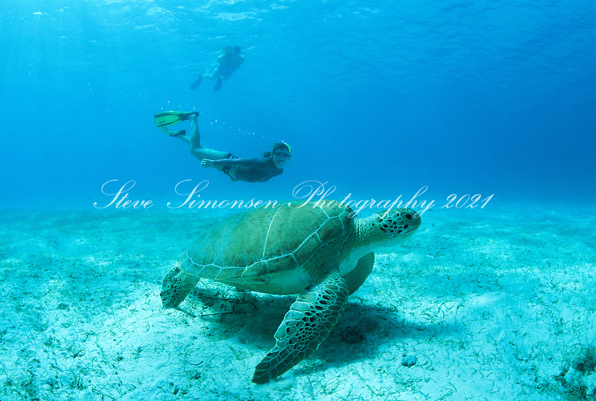 Snorkeler and Green Sea Turtle<br />