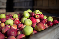 Apple stand in stacked wooden boxes at Carver Hill Orchard in Stow, Massachusetts, USA.