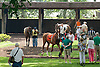 Southwest Lady before The White Clay Creek Stakes at Delaware Park on 7/25/13