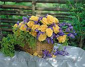 Carl, FLOWERS, nature, photos, SWLA, SWLA890,#F# Blumen, Natur, flores, naturaleza