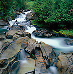 Mount Rainier National Park,  WA  <br /> The waters of the Paradise River flow over granite boulders through a fir and spruce forest