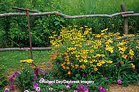 63821-18815 Rustic fence with Black-eyed Susans (Rudbeckia hirta), Prairie Sun & Goldstrum Rudbeckia, Butterfly Weed & Homestead Purple Verbena