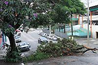 SÃO PAULO 08 DE MARÇO DE 2013 - QUEDA ARVORE - Queda de arvore apos chuva na rua Padre Machado no bairro do Ipiranga regiao sul da cidade de Sao Paulo nesta sexta-feira. FOTOS: MICHELLESPREA/BRAZILPHTOPRESS