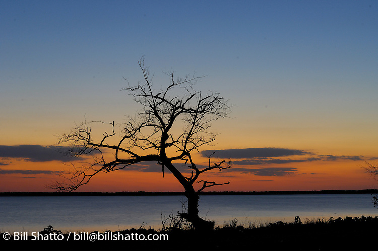 Silhouette of a bare tree at sunset along the causeway to Chokoloskee Island, Florida.