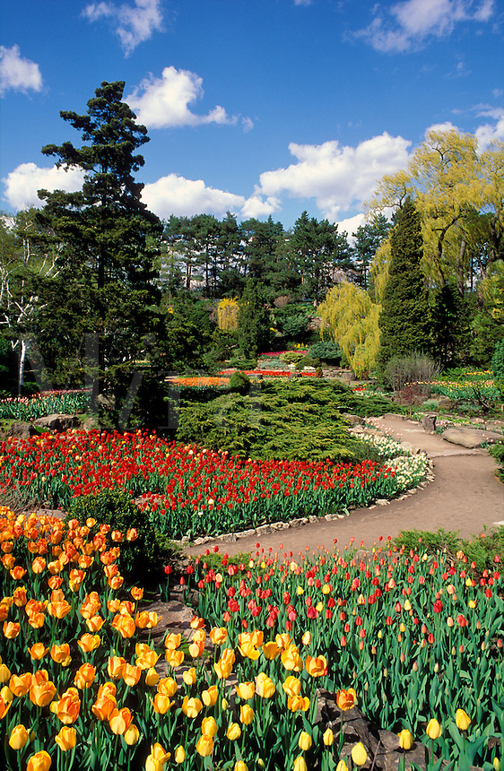 Canada, Ontaio, Burlington. Royal Botanical Gardens in spring with tulips in bloom