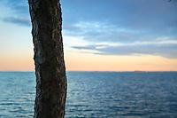 Trädstam vid vatten i Stockholms skärgård. / Tree trunk in water, in the Stockholm archipelago.