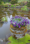 Shore Acres State Park, OR: Moss covered pot with petunias on the edge of the pond at the Simpson Estate Garden in spring