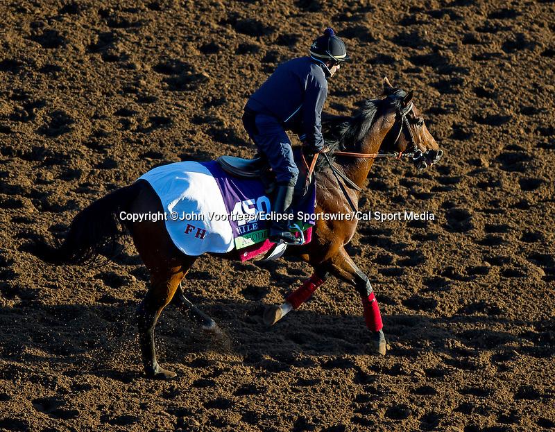 October 28, 2014: Amodin exercises at Santa Anita Race Course in Arcadia, California on October 28, 2014.John Voorhees/ESW/CSM