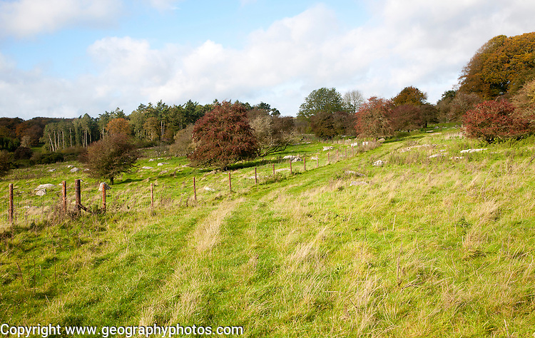 Fyfield Down national nature reserve, Marlborough Downs, Wiltshire, England, UK one of the country's oldest created in 1955 of unimproved chalk grassland with sarsen stones in dry valleys