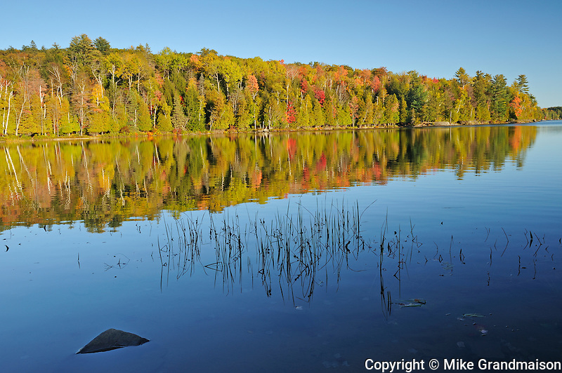 forest in autumn foliage reflected in Silent Lake<br /> Silent Lake Provincial Park<br /> Ontario<br /> Canada