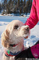 Family dog in the snow.