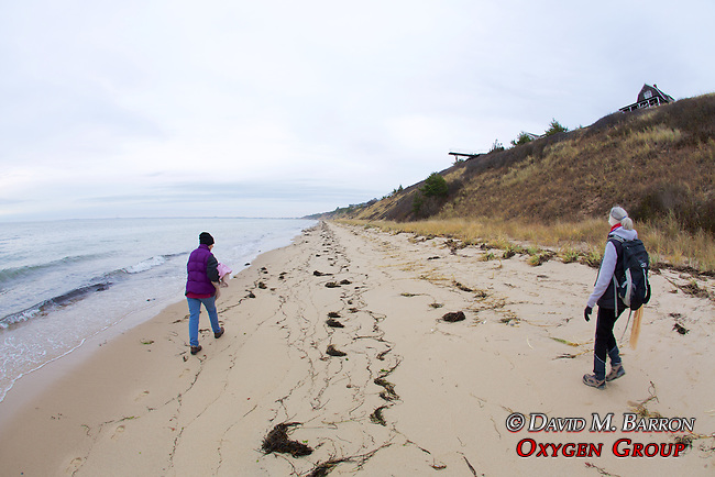 Judith Rhome & Geneviève Martin, Looking For Stranded Sea Turtles On Beach Survey