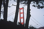 GOLDEN GATE BRIDGE THROUGH TREES (5)