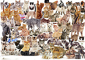 Kim, ANIMALS, REALISTISCHE TIERE, ANIMALES REALISTICOS, fondless, photos+++++,GBJBWP13686,#a#