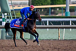 October 28, 2019 : Breeders' Cup Filly & Mare Turf entrant Castle Lady, trained by Henri Alex Pantall, exercises in preparation for the Breeders' Cup World Championships at Santa Anita Park in Arcadia, California on October 28, 2019. Scott Serio/Eclipse Sportswire/Breeders' Cup/CSM