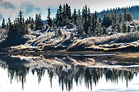 The season's first snow coats high country foliage with a coating of snow and ice, Brainard Lake Colorado.