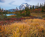 Mount Baker-Snoqualmie National Forest, WA: Grasses and huckleberries in fall color at Picture Lake with Mount Shuksan at dusk