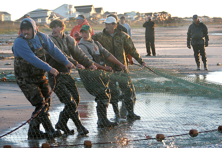 Chuck Beckley    The crew has to pull together to get the heavy, mullet nets onto the beach.