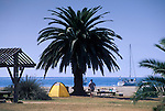 Man on beach, offshore sailboat, and palm tree at Little Harbor Campground, Catalina Island, California
