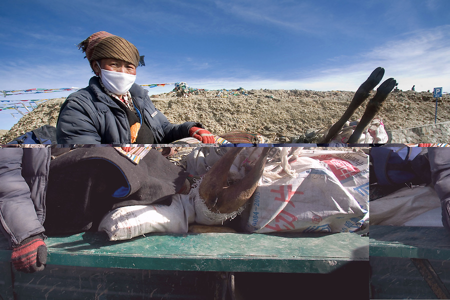 A woman farmer on the back of a truck, on her way to Lhasa with supplies, including a goat, for the Tibetan New Year.
