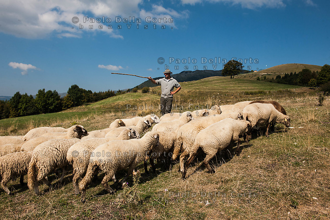 Altopiano del Cansiglio - Sebastiano Fullin porta le pecore a pascolare sulla' Altopiano del Cansiglio, dove ha a disposizione un terreno di 13 ettari.