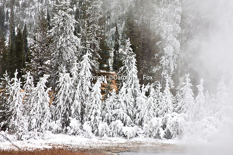 The steam and cold air formed a winter wonderland when Yellowstone got an early snow storm.