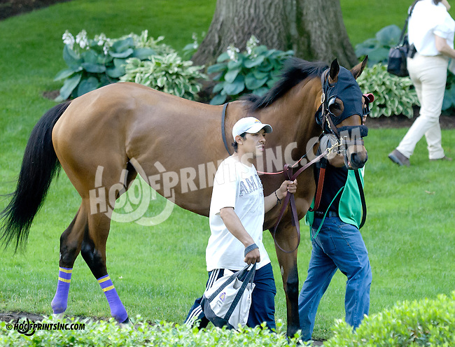 Mary Bernice before The Justakiss Stakes at Delaware Park racetrack on 6/5/14