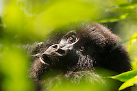 June was an exciting month with a trip to the Virunga National Park in the DRC to photograph Gorillas and Volcanoes!<br />