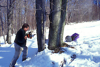 maple syrup, winter, VT, Westford, Vermont, Man drills (tapping) maple trees for collecting sap at sugaring time in early spring.