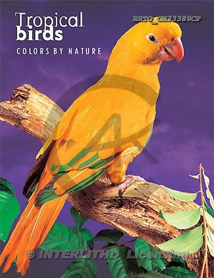 Alfredo, NOTEBOOKS, paintings, BRTOCH33389CP,#NB# cuadernos, illustrations, pinturas