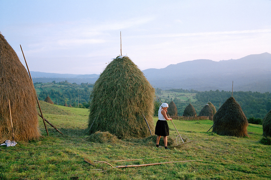 ROMANIA / Maramures / Breb / September 2006..Haymaking in the small village of Breb...© Davin Ellicson / Anzenberger.